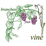 vineandbranches